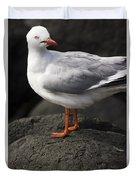 Suprised Australian Seagull Duvet Cover