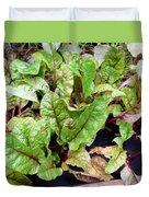 Swiss Chard In A Vegetable Garden 1 Duvet Cover