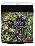 Tarantula Pamphobeteus Sp Male, Mindo Duvet Cover