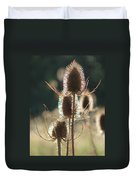 Teasle In Morning Light Duvet Cover