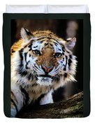 That Tiger Look Duvet Cover