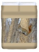 The American Red Squirrel Duvet Cover