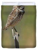 The Burrowing Owl Duvet Cover