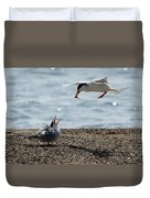 The Courtship Feeding - Series 1 Of 3 Duvet Cover