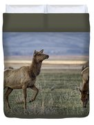 The Cow Elk Duvet Cover