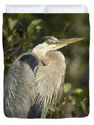 The Gaze - Great Blue Heron - Ardea Hernias Duvet Cover
