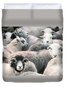 The Herdwicks Duvet Cover