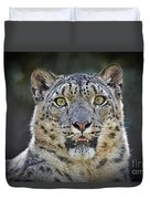 The Intense Stare Of A Snow Leopard Duvet Cover