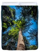 the Redwoods of Muir Woods Duvet Cover