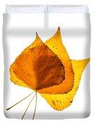 Three Backlit Cottonwood Leaves In Autumn On White Duvet Cover