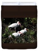 Three Buddies - White Ibis Duvet Cover