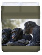 Three Chimpanzees Socializing  Duvet Cover