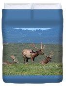 Three Tule Elk Bulls In Meadow Duvet Cover