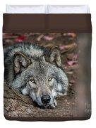 Timber Wolf Picture - Tw286 Duvet Cover
