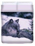 T.kitchin, 19552c Gray Wolf, Winter Duvet Cover