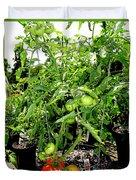 Tomatoes On The Vine Duvet Cover