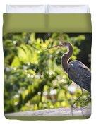 Tri-colored Heron Fledgling  Duvet Cover