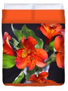 Trio Of Alstroemeria Inca Flowers-4 Duvet Cover