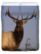 Tule Elk - Tomales Point Duvet Cover