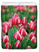 Tulips - Candy Apple Delight 02 Duvet Cover
