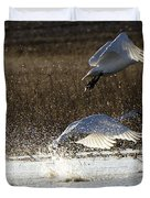 Tundra Swans Take Off 2 Duvet Cover