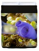 Tunicates Didemnum Molle, Also Known Duvet Cover
