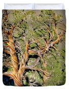 Twisted Bristlecone Duvet Cover