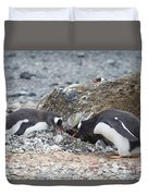 two Gentoos Duvet Cover