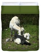 Two Goats In A Pasture Duvet Cover