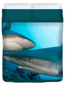 Two Gray Reef Sharks Duvet Cover by Dave Fleetham - Printscapes