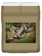 Two Intertwined Grass Snakes Lying In The Sun Duvet Cover