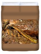 Two Lined Salamander Duvet Cover