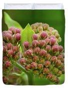 Two Milkweed Flowers Buds  Duvet Cover