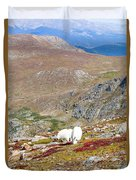 Two Mountain Goats On Mount Bierstadt In The Arapahoe National Fores Duvet Cover
