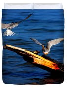 Two Terns Today Duvet Cover by Amanda Struz
