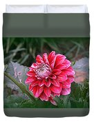 Variegated Colored Dahlia Duvet Cover