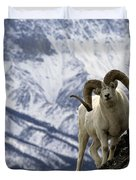 Very Large Dall Sheep Ram On The Grassy Duvet Cover