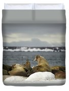 Walruses With Giant Tusks At Arctic Haul-out Duvet Cover