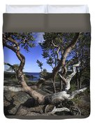 Weather Beaten Pine Tree At The Coast Duvet Cover