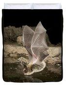 Western Long-eared Myotis Drinking Duvet Cover