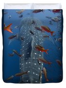 Whale Shark Galapagos Islands Duvet Cover