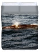Whale Watching Balenottera Comune 7 Duvet Cover