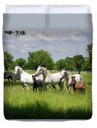 White Lipizzaner Mares Horse Breed With Dark Foals Grazing In A  Duvet Cover
