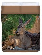 White-tailed Deer H1829 Duvet Cover