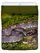 White-tailed Hognose Viper Duvet Cover