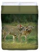 Whitetail Deer Share An Initmate Moment Texas Wildlife Duvet Cover