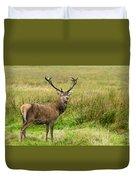 Wild Deer Animals   Duvet Cover