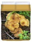 Wild Mushrooms 1 Duvet Cover