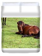 Wild Mustang At Rest Duvet Cover