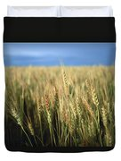 Winter Wheat In Linn, Kansas Duvet Cover